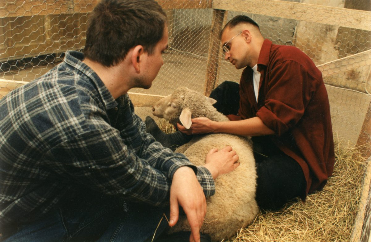 Two men and a sheep 1–3