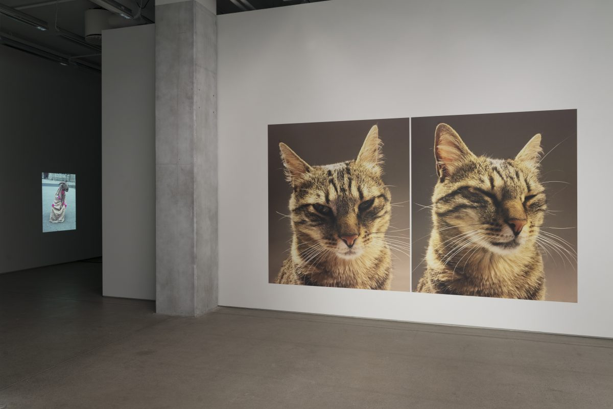Cat Portrait and Other Works