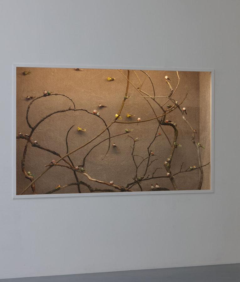 Fenster (Wand und Vogel), (Vorhang und Aufkleber) (Teppich und Vögel)